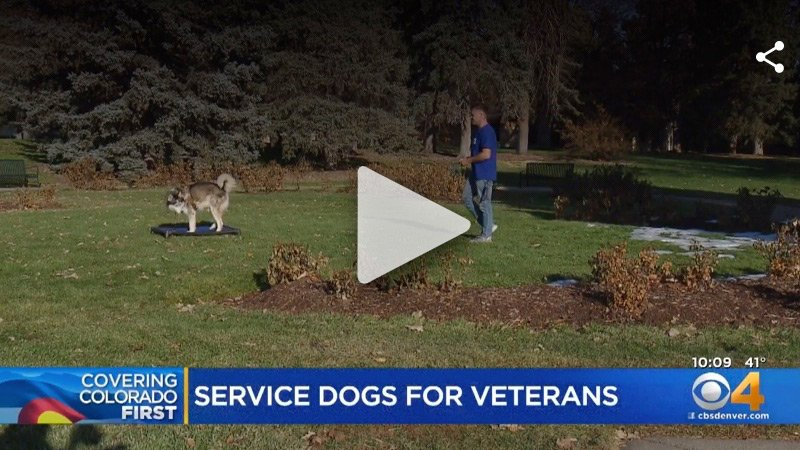 Congress Considers Bill To Have VA Fund Service Dogs For Veterans With PTSD